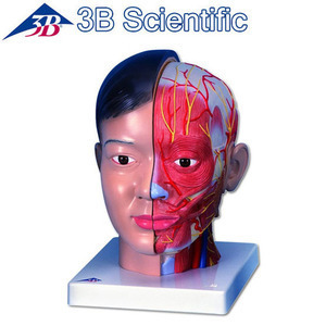 [3B] 아시아인 얼굴모형 C06 (Asian Deluxe Head with Neck,4 part)